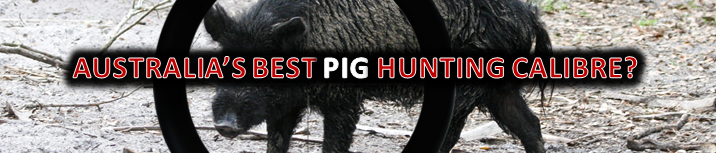 What Is Australia's Best Pig Hunting Calibre? | Hunting com au