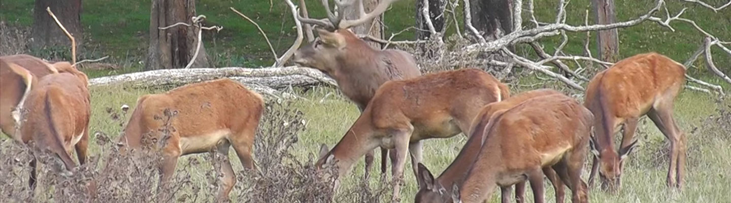 deer_header_nz