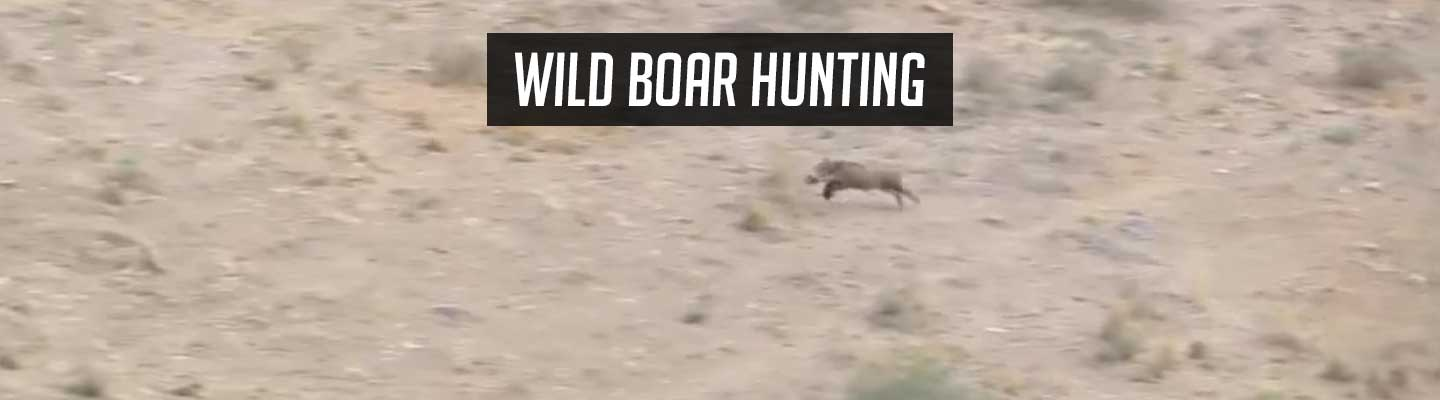 boar_hunting_header