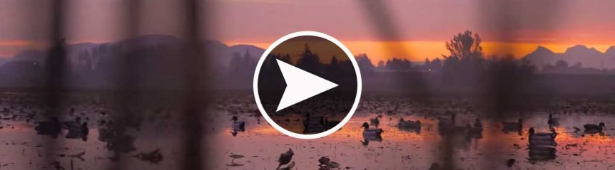 duckhunting_washington_header