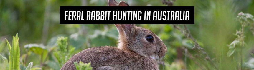 feral_rabbit_hunting_header