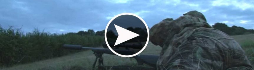 fallow_deer_hunting_england