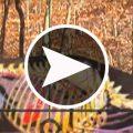deerhunting_placement