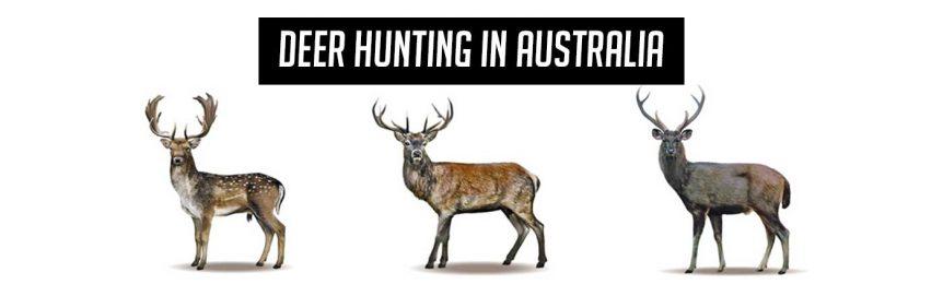 deerhunting_header