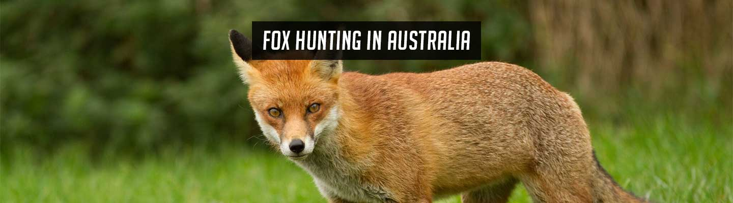fox-hunting-header