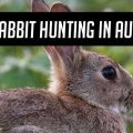 feral_rabbit_hunting_header